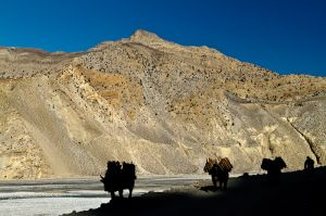 Jomsom Day 5 043-Edit.jpg